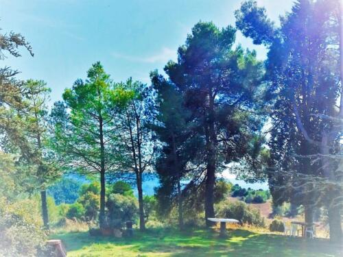 arbres_1